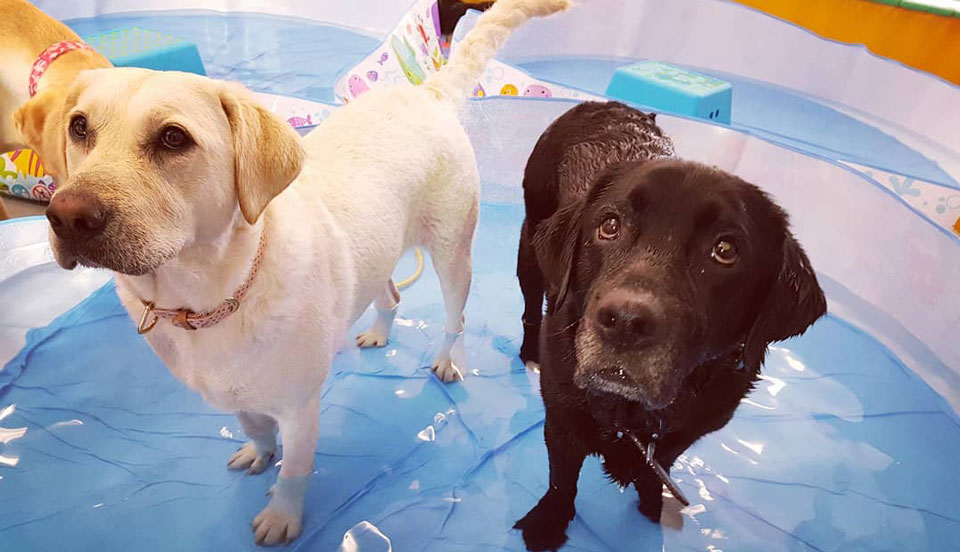 Dog Daycare Galway Pool Parties Dog Enrichment