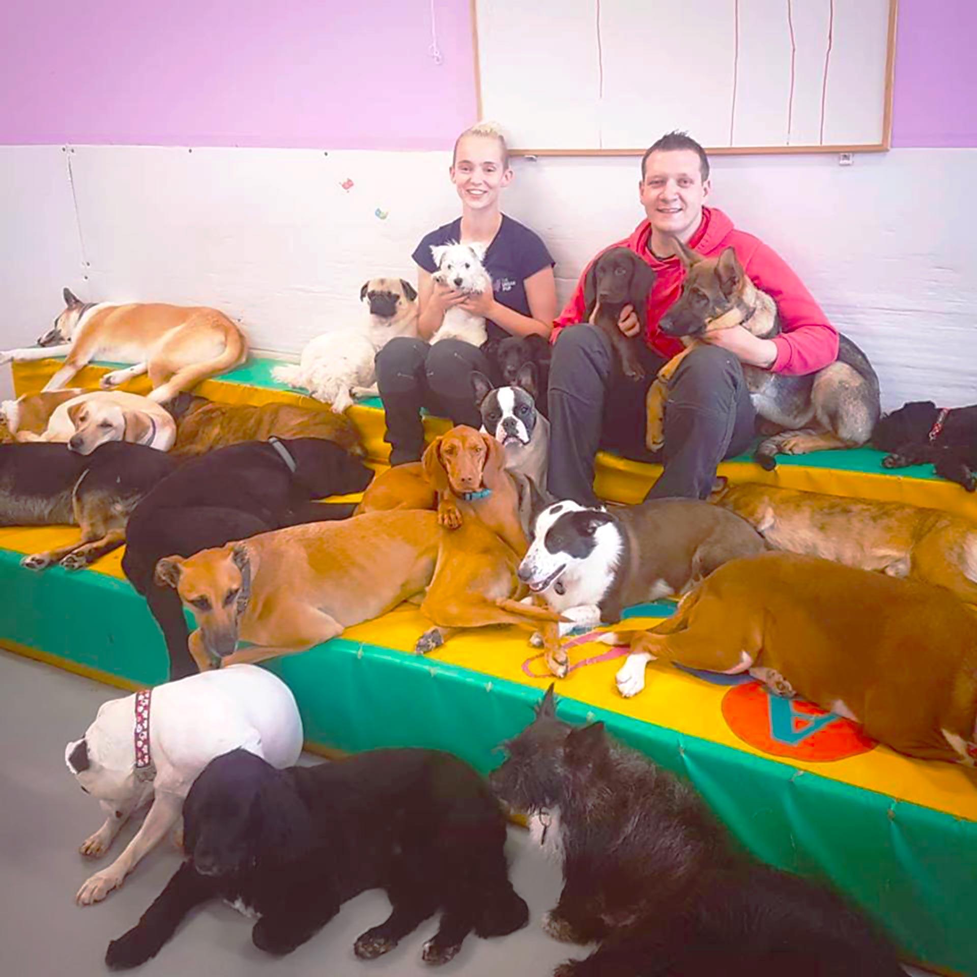 Galway Dog Daycare Puppy Ireland