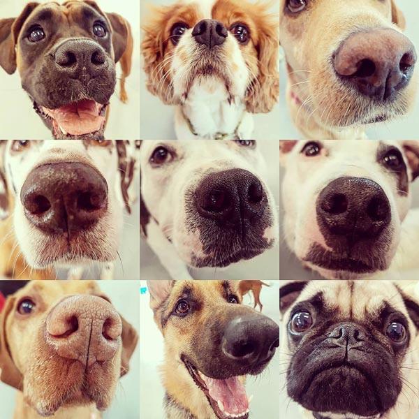 Adult Dog Training Galway