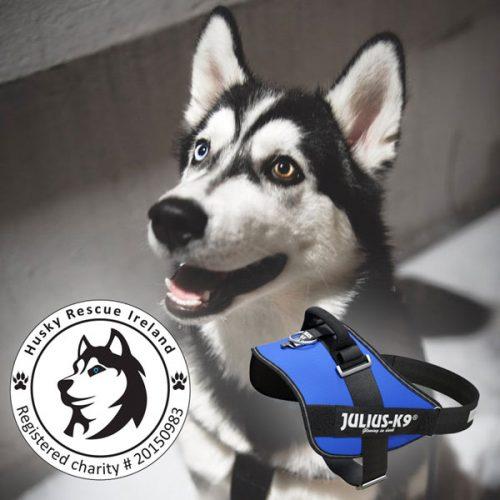 Husky Rescue Ireland Julius K9 Donation
