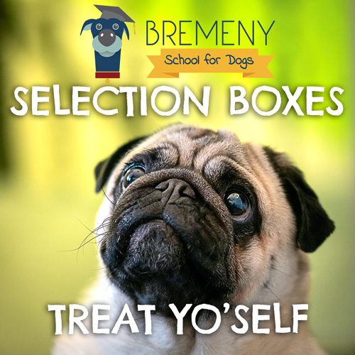 Bremeny School for Dogs Selection Boxes