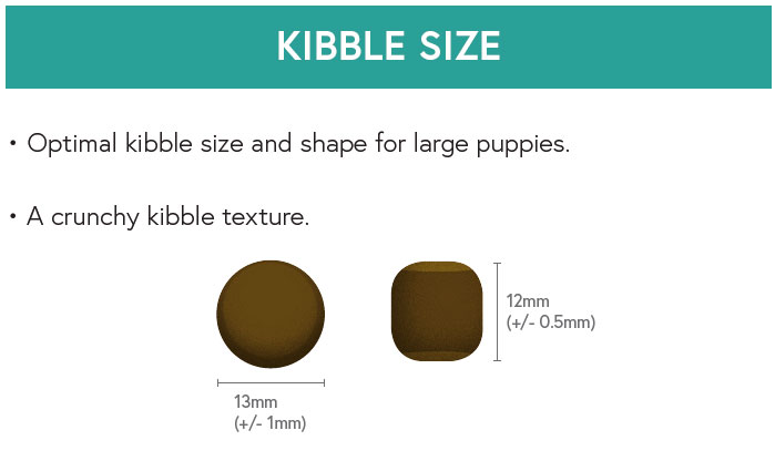 Kibble Size - Salmon with Sweet Potato and Vegetables for Large Breed Puppies