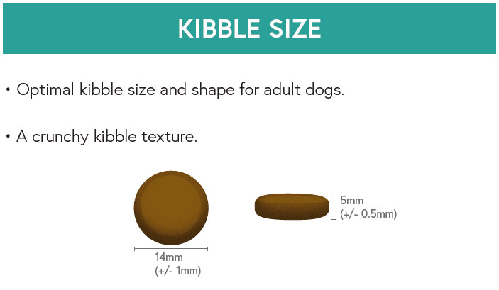 Kibble Size - Salmon with Trout, Sweet Potato and Asparagus for Adult Dogs