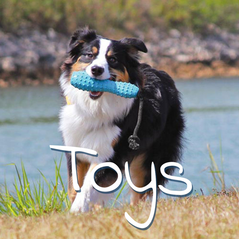 Dog Toys Galway