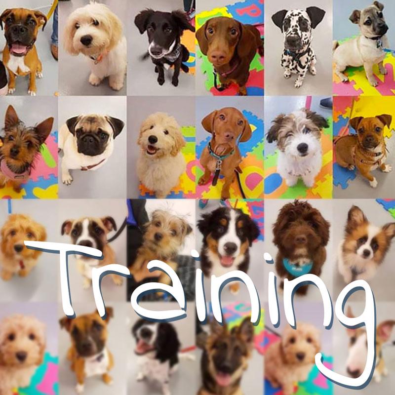 Online Dog Training Galway